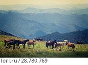 Купить «horses on mountains meadow», фото № 28780769, снято 17 июля 2011 г. (c) Яков Филимонов / Фотобанк Лори