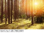 Купить «Лесной пейзаж», фото № 28780841, снято 12 июля 2018 г. (c) Икан Леонид / Фотобанк Лори