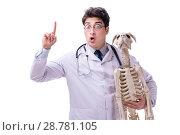 Купить «Doctor with dog skeleton isolated on white background», фото № 28781105, снято 27 февраля 2018 г. (c) Elnur / Фотобанк Лори