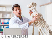 Купить «Doctor vet practicing on dog skeleton», фото № 28789613, снято 23 марта 2018 г. (c) Elnur / Фотобанк Лори
