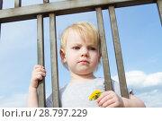Купить «Маленькая девочка с цветком одуванчика смотрит сквозь решетку забора», фото № 28797229, снято 6 июня 2018 г. (c) Момотюк Сергей / Фотобанк Лори