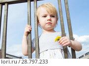 Купить «Маленькая девочка с цветком одуванчика смотрит сквозь решетку забора», фото № 28797233, снято 6 июня 2018 г. (c) Момотюк Сергей / Фотобанк Лори