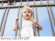 Купить «Маленькая девочка с цветком одуванчика смотрит сквозь решетку забора», фото № 28797237, снято 6 июня 2018 г. (c) Момотюк Сергей / Фотобанк Лори