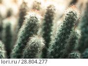 Купить «Small cactus. Natural macro photo», фото № 28804277, снято 7 июня 2018 г. (c) EugeneSergeev / Фотобанк Лори