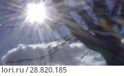 Купить «Sun shining in blue sky, view through the tree. Retro video», видеоролик № 28820185, снято 16 октября 2018 г. (c) Данил Руденко / Фотобанк Лори
