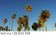 Купить «palm trees over sun shining in blue sky», видеоролик № 28833169, снято 5 июля 2018 г. (c) Syda Productions / Фотобанк Лори
