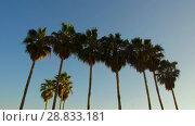 Купить «palm trees over sun shining in blue sky», видеоролик № 28833181, снято 8 июля 2018 г. (c) Syda Productions / Фотобанк Лори