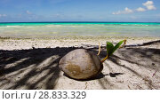 Купить «coconut on tropical beach in french polynesia», видеоролик № 28833329, снято 1 июля 2018 г. (c) Syda Productions / Фотобанк Лори