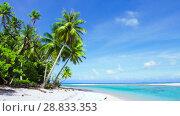 Купить «tropical beach with palm trees in french polynesia», видеоролик № 28833353, снято 1 июля 2018 г. (c) Syda Productions / Фотобанк Лори