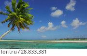 Купить «tropical beach with palm tree in french polynesia», видеоролик № 28833381, снято 1 июля 2018 г. (c) Syda Productions / Фотобанк Лори