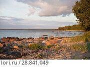Купить «Побережье Балтийского моря в Эстонии на закате в солнечный день», фото № 28841049, снято 6 июля 2018 г. (c) Victoria Demidova / Фотобанк Лори