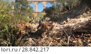 Купить «Roman aqueduct in city of Taragona in summer», фото № 28842217, снято 31 января 2018 г. (c) Татьяна Яцевич / Фотобанк Лори