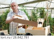 Купить «Male farmer working in hothouse», фото № 28842781, снято 16 августа 2018 г. (c) Яков Филимонов / Фотобанк Лори