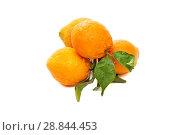 Купить «Orang fruit isolate», фото № 28844453, снято 23 февраля 2020 г. (c) Игорь Бородин / Фотобанк Лори