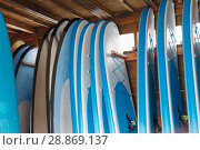 Купить «Boards for surfing and stand up paddle boarding for rent in surf club», фото № 28869137, снято 30 апреля 2018 г. (c) Яков Филимонов / Фотобанк Лори