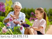 Купить «grandmother and girl planting flowers at garden», фото № 28870113, снято 3 июня 2018 г. (c) Syda Productions / Фотобанк Лори