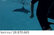 Купить «Woman look at on Dolphin in the blue water (Spinner Dolphin, Stenella longirostris) Underwater view, Close-up, Underwater shot, 4K / 60fps», видеоролик № 28870665, снято 24 июля 2018 г. (c) Некрасов Андрей / Фотобанк Лори
