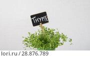 Купить «green thyme herb with name plate in pot on table», видеоролик № 28876789, снято 17 июля 2018 г. (c) Syda Productions / Фотобанк Лори