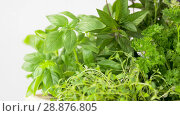 Купить «green herbs, spices and flowers», видеоролик № 28876805, снято 17 июля 2018 г. (c) Syda Productions / Фотобанк Лори