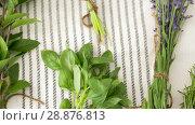 Купить «greens, spices or medicinal herbs on table», видеоролик № 28876813, снято 17 июля 2018 г. (c) Syda Productions / Фотобанк Лори