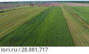 Купить «Зеленой сельскохозяйственное поле во время сбора урожая. Грузовики стоят на обочине дороги в очереди на погрузку», видеоролик № 28881717, снято 21 июня 2018 г. (c) Кекяляйнен Андрей / Фотобанк Лори