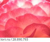 Купить «Abstract background of rose petals», фото № 28890793, снято 1 августа 2018 г. (c) Антон Гвоздиков / Фотобанк Лори