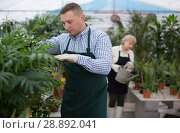 Купить «Adult man is taking care of blooming flowers on his work place», фото № 28892041, снято 23 февраля 2018 г. (c) Яков Филимонов / Фотобанк Лори