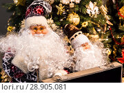 Christmas and New Year background. Two Santa Claus on the background of a Christmas tree decorated for celebration. Стоковое фото, фотограф Светлана Евграфова / Фотобанк Лори