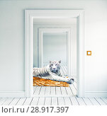 Купить «white tiger on the orange carpet», фото № 28917397, снято 20 мая 2019 г. (c) Виктор Застольский / Фотобанк Лори