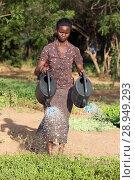 Купить «Kakuma, Kenya - Gardening in Kakuma refugee camp, managed and funded by GIZ / UNHCR.», фото № 28949293, снято 31 августа 2015 г. (c) Caro Photoagency / Фотобанк Лори
