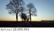 Купить «New Kaetwin, Germany - country road at sunset», фото № 28950993, снято 22 января 2017 г. (c) Caro Photoagency / Фотобанк Лори