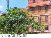 Купить «Flock of pigeons in a branched tree, Nepal», фото № 28972581, снято 13 апреля 2018 г. (c) Валерий Смирнов / Фотобанк Лори