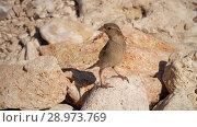 Купить «Sparrow on the stone», видеоролик № 28973769, снято 10 августа 2018 г. (c) Илья Шаматура / Фотобанк Лори