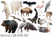 Купить «set of north american animals isolated», фото № 28974121, снято 20 марта 2019 г. (c) Яков Филимонов / Фотобанк Лори