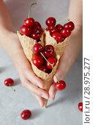 Купить «Close-up of red ripe juicy cherries with waffle cones in girls hands on a gray.», фото № 28975277, снято 30 мая 2018 г. (c) Ярослав Данильченко / Фотобанк Лори