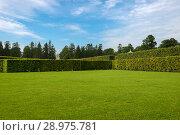 Купить «Ряды деревьев, с геометрически правильной планировкой, в Нижнем саду в Екатерининском парке. Санкт-Петербург, Пушкин, Царское Село», фото № 28975781, снято 19 августа 2017 г. (c) Pukhov K / Фотобанк Лори
