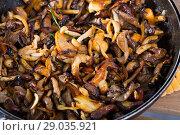Купить «Tasty freshly cooked fried oyster mushrooms in a frying pan», фото № 29035921, снято 9 декабря 2018 г. (c) Яков Филимонов / Фотобанк Лори