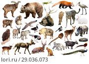 Купить «animal collection asia», фото № 29036073, снято 18 ноября 2018 г. (c) Яков Филимонов / Фотобанк Лори