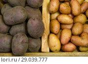 Купить «Разложенный урожай картофеля двух сортов», фото № 29039777, снято 13 августа 2018 г. (c) Игорь Кутателадзе / Фотобанк Лори