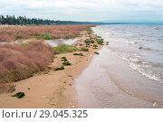 Купить «Берег озера Арахлей», фото № 29045325, снято 18 августа 2018 г. (c) Геннадий Соловьев / Фотобанк Лори