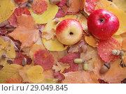 Купить «apples and autumn leaves with rain drops», фото № 29049845, снято 2 сентября 2018 г. (c) Майя Крученкова / Фотобанк Лори