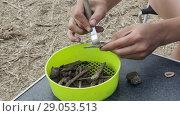 Купить «Работа археолога по первичной очистке находок», видеоролик № 29053513, снято 4 августа 2018 г. (c) Круглов Олег / Фотобанк Лори