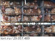 Купить «Куры в многоярусных клетках. Транспортировка птиц на автомобиле», эксклюзивное фото № 29057489, снято 3 сентября 2018 г. (c) Щеголева Ольга / Фотобанк Лори