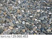 Купить «background of large pebbles on the beach», фото № 29060453, снято 5 июня 2018 г. (c) Володина Ольга / Фотобанк Лори