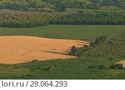 Купить «Зелёные поля. Сельскохозяйственный ландшафт. Урожай. Юг России.», фото № 29064293, снято 9 июля 2018 г. (c) Лашков Фёдор / Фотобанк Лори