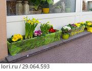 Купить «Горшки и ящики с живыми цветами, выставленные на улицу рядом с цветочным магазином. Весна.», фото № 29064593, снято 8 марта 2018 г. (c) Сергей Рыбин / Фотобанк Лори