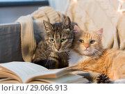 Купить «two cats lying on sofa with book at home», фото № 29066913, снято 15 ноября 2017 г. (c) Syda Productions / Фотобанк Лори