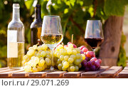 Купить «still life with glasses of red and white wine and grapes in field of vineyard», фото № 29071269, снято 19 октября 2018 г. (c) Татьяна Яцевич / Фотобанк Лори