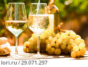 Купить «glass of White wine ripe grapes and bread on table in vineyard», фото № 29071297, снято 19 октября 2018 г. (c) Татьяна Яцевич / Фотобанк Лори