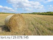 Купить «Тюк соломы на скошенном поле. Сельский пейзаж», фото № 29078145, снято 3 сентября 2018 г. (c) Ирина Носова / Фотобанк Лори